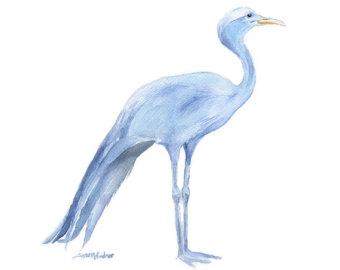 Blue crane.