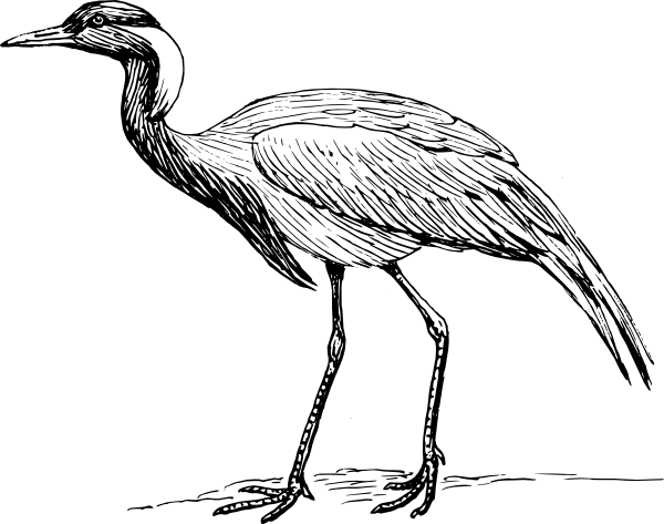 Demoiselle Crane Drawing Clip Art at Clker.com.