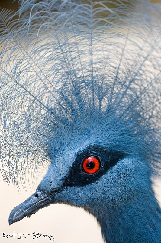 blue animals.