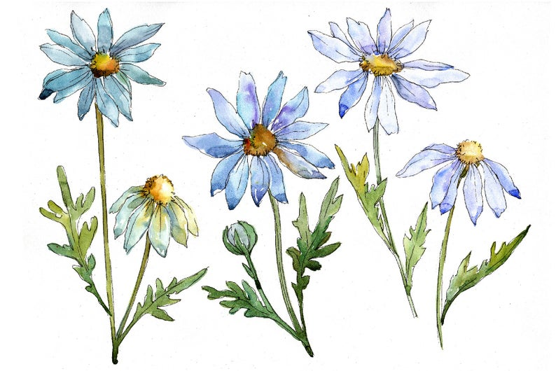 Watercolor blue daisy clipart, hand painted flowers, Commercial Use,  Personal Use.