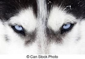 Stock Photo of dog blue eyes.
