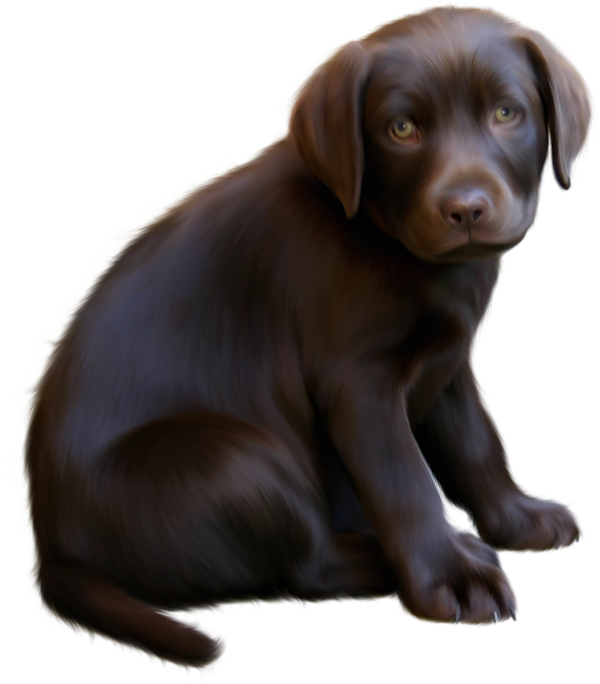 Cute_Little_Brown_Dog_with_Blue_Eyes_Clipart.png?m=1363734000.