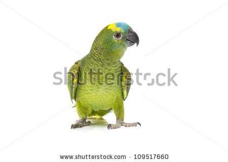 Parrot Isolated Stock Photos, Royalty.