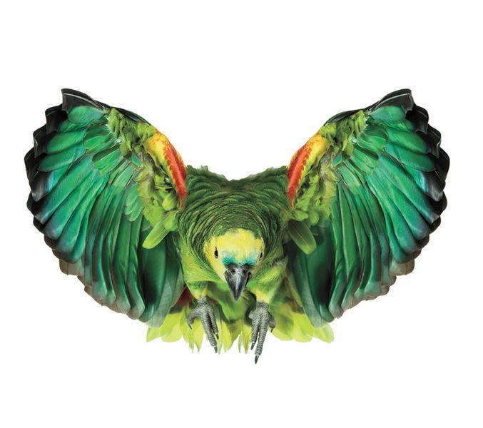 1000+ images about La Selva Amazónica on Pinterest.