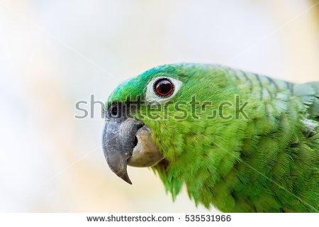 Parrot Stock Photos, Royalty.