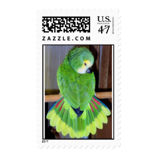 Blue Fronted Amazon Parrot Postage.