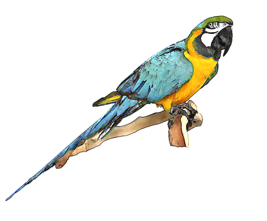Blue And Gold Macaw Clipart.