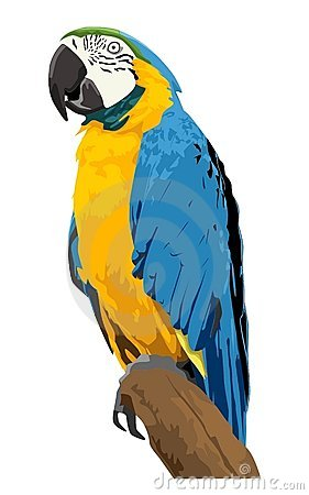 Blue Gold Macaw Stock Illustrations.