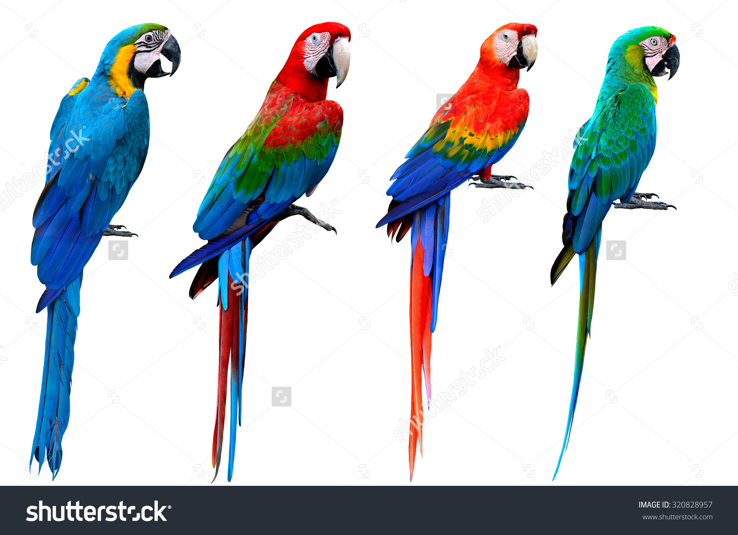 Collection Macaw Birds Blue Gold Greenwinged Stock Photo 320828957.