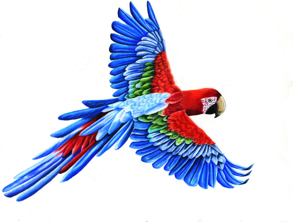 Flying macaw clipart.