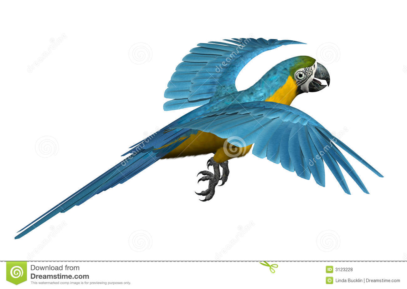 Blue and gold macaw icon clipart.