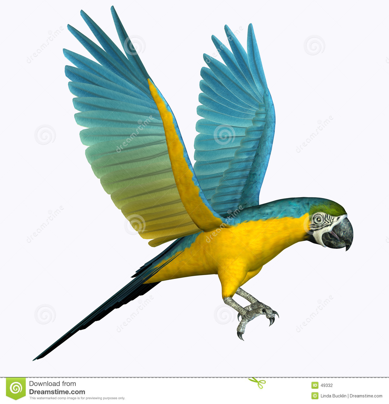 Macaw Stock Illustrations.