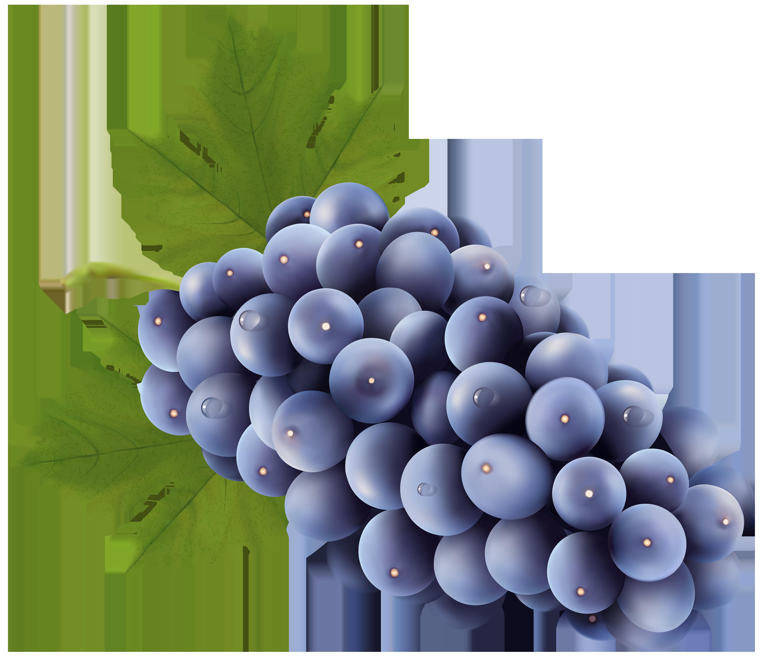 Grapes Free PNG Clip Art Image.