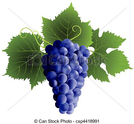 Grape Clipart and Stock Illustrations. 23,642 Grape vector EPS.