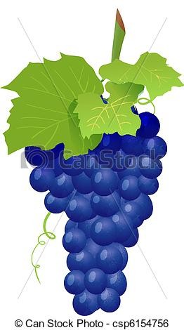 Clip Art Vector of Grape cluster isolated on white. Vector.