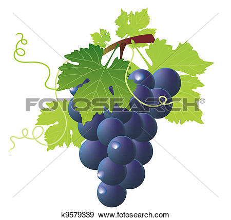 Clip Art of green wine and bunch of blue grapes k9579339.
