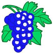 Blue Grapes Clip Art.