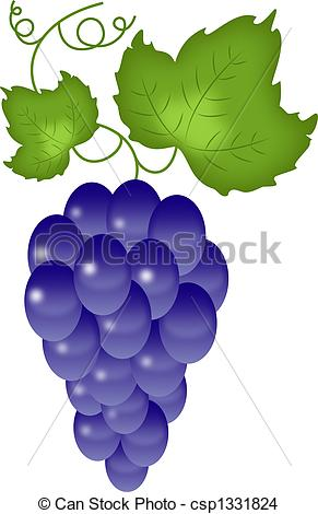 Drawing of Grapes on the white.