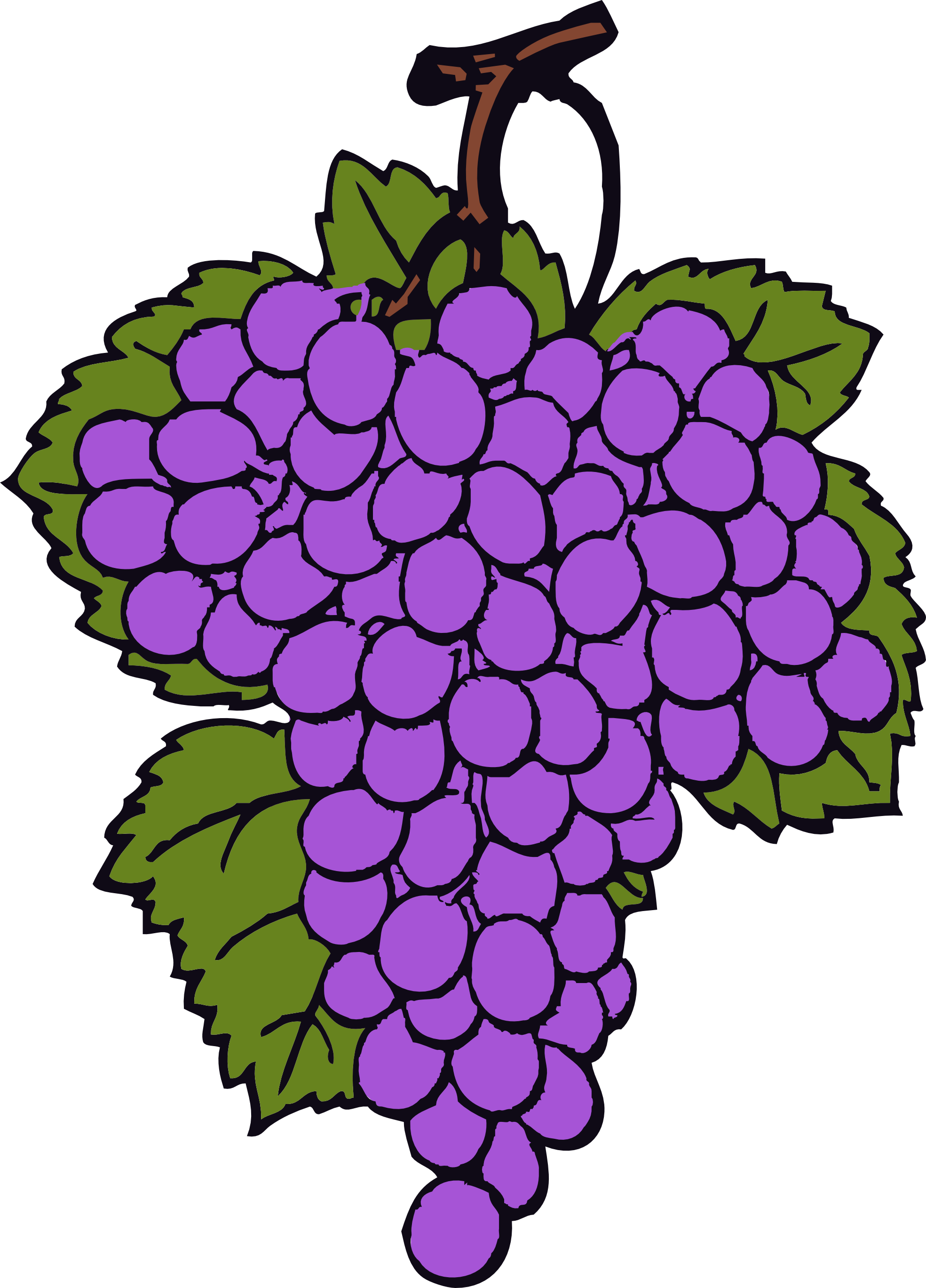 Purple green grape clipart.