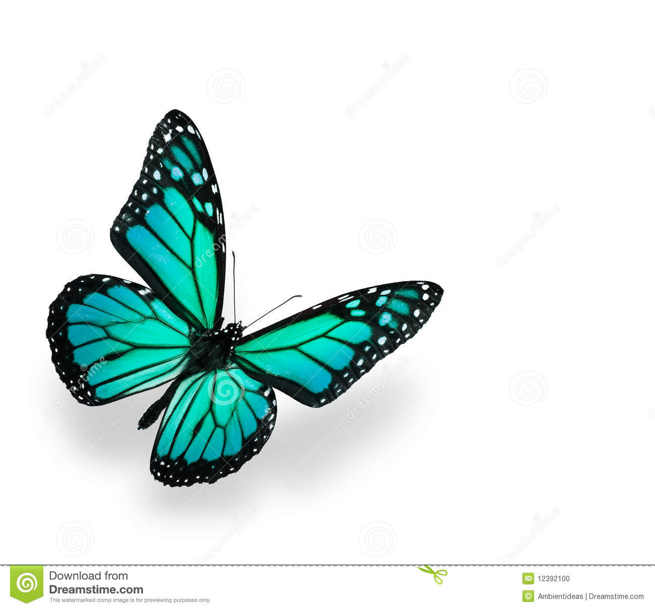 Blue Green Butterfly Isolated On White Stock Photography.
