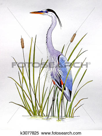 Stock Illustration of Great Blue Heron k3077825.