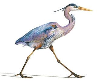 Blue heron clipart.