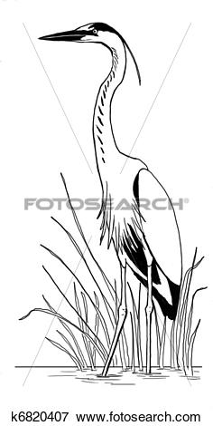Stock Illustration of Great Blue Heron in reeds k6820407.