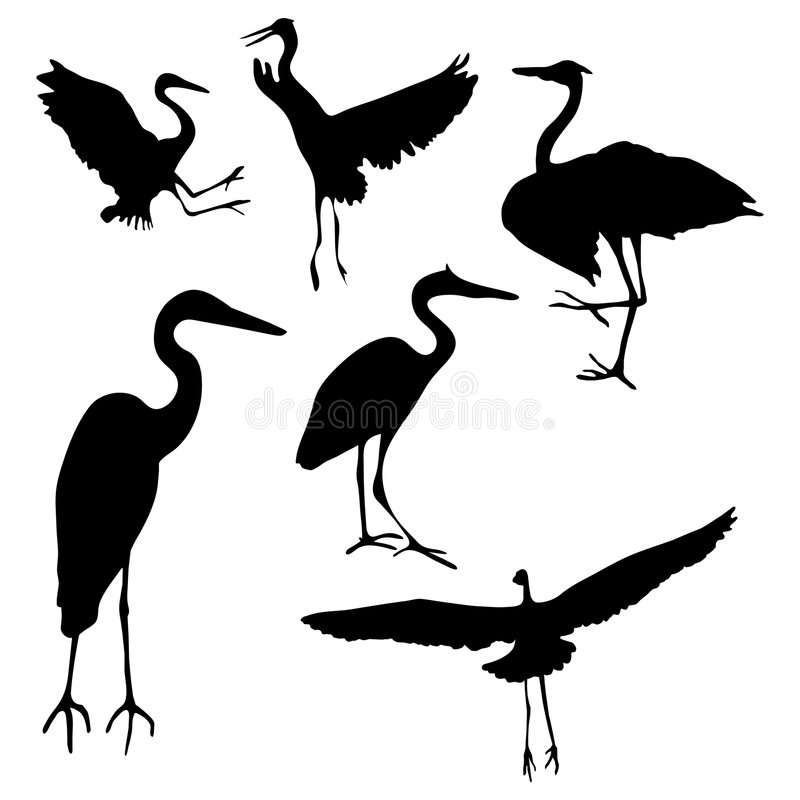Great Blue Heron Stock Illustrations.