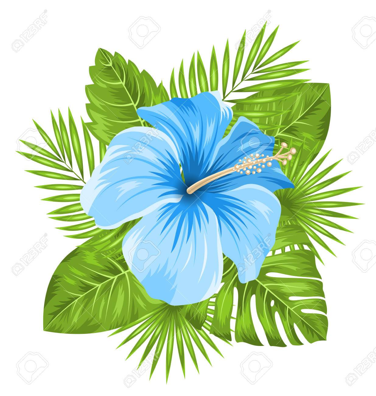 Illustration Beautiful Blue Hibiscus Flowers Blossom and Tropical...