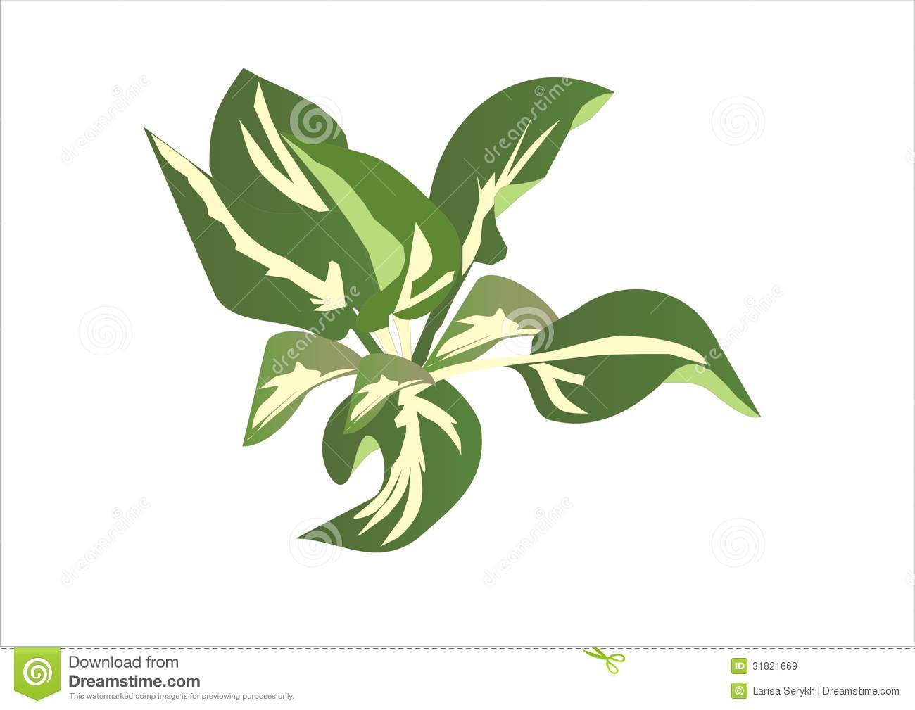 Hosta Stock Illustrations.