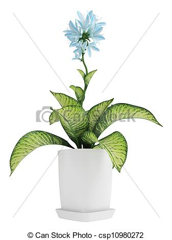 Stock Illustrations of Pretty blue flowering Hosta with variegated.