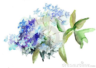 Hydrangea Flower Bloom Watercolor Painting Stock Photos, Images.