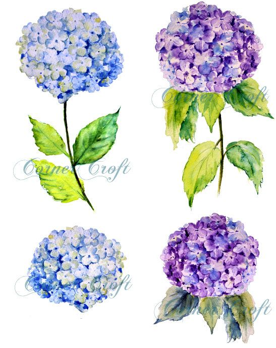Hand painted watercolour blue hydrangea digital clipart printable.