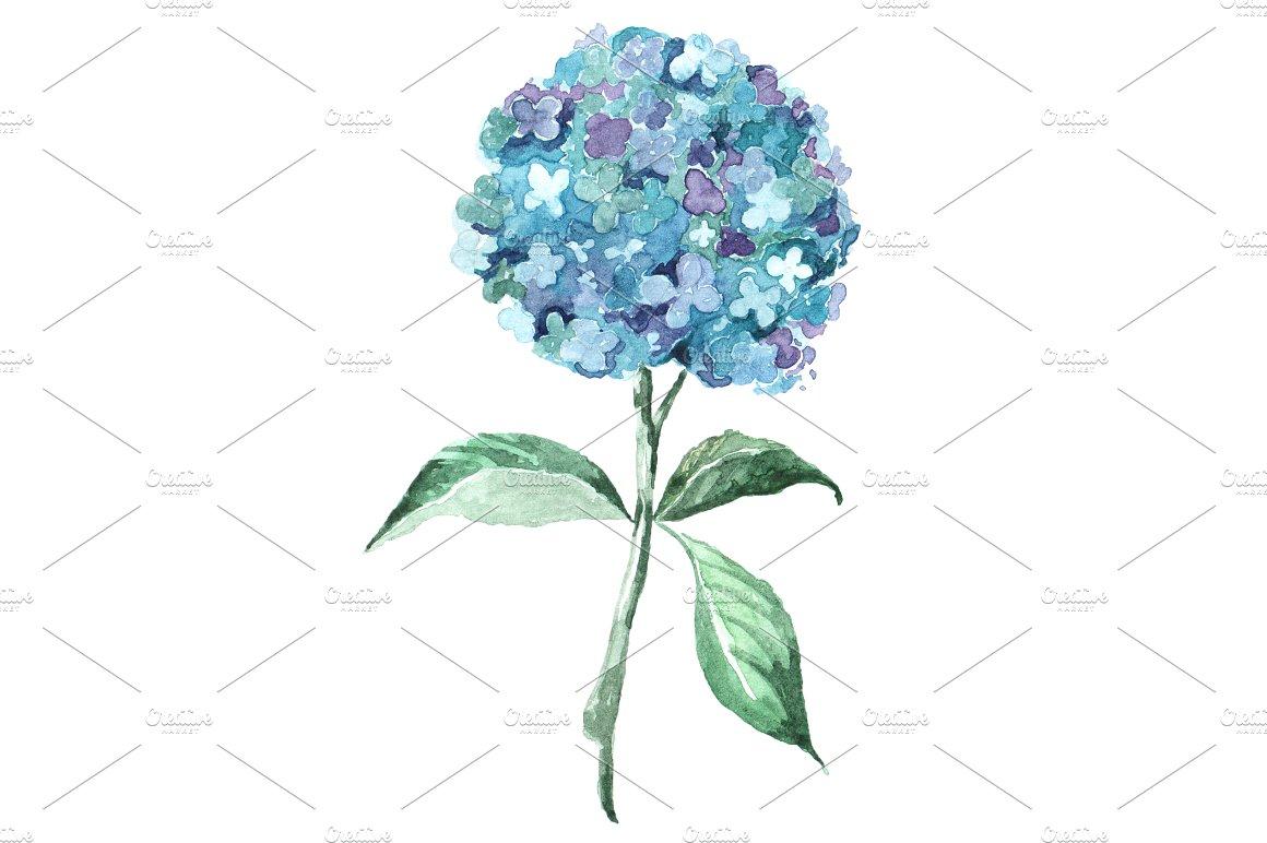 Blue Hydrangea Watercolor Clip Art ~ Objects on Creative Market.
