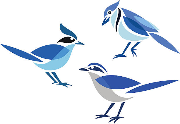 Best Blue Jay Illustrations, Royalty.