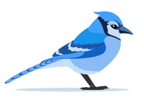 Search Results for blue jay.