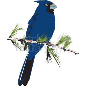 blue jay bird clipart. Royalty.