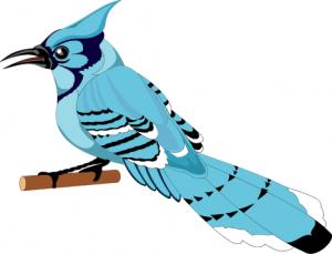 Blue Jay Clip Art Download.