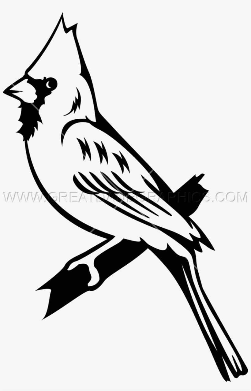 Bluejay Drawing Cardinal.
