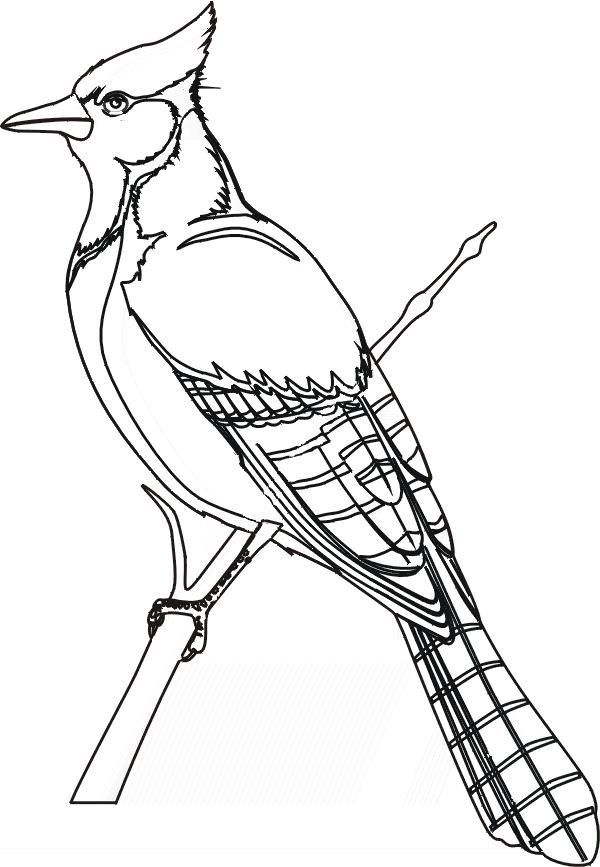Blue jay clipart black and white 6 » Clipart Portal.