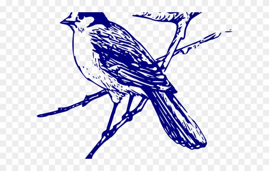 Blue Jay Clipart Vector.