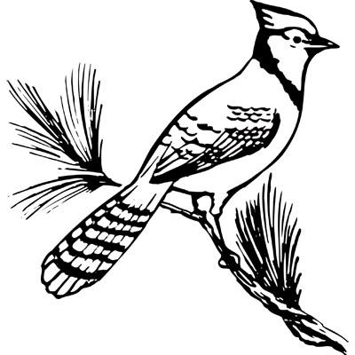 Blue Jay Bird Clip Art.
