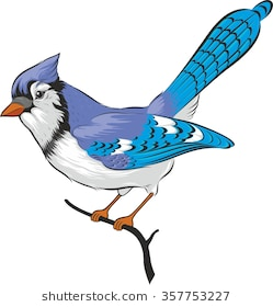 206 Blue Jay free clipart.