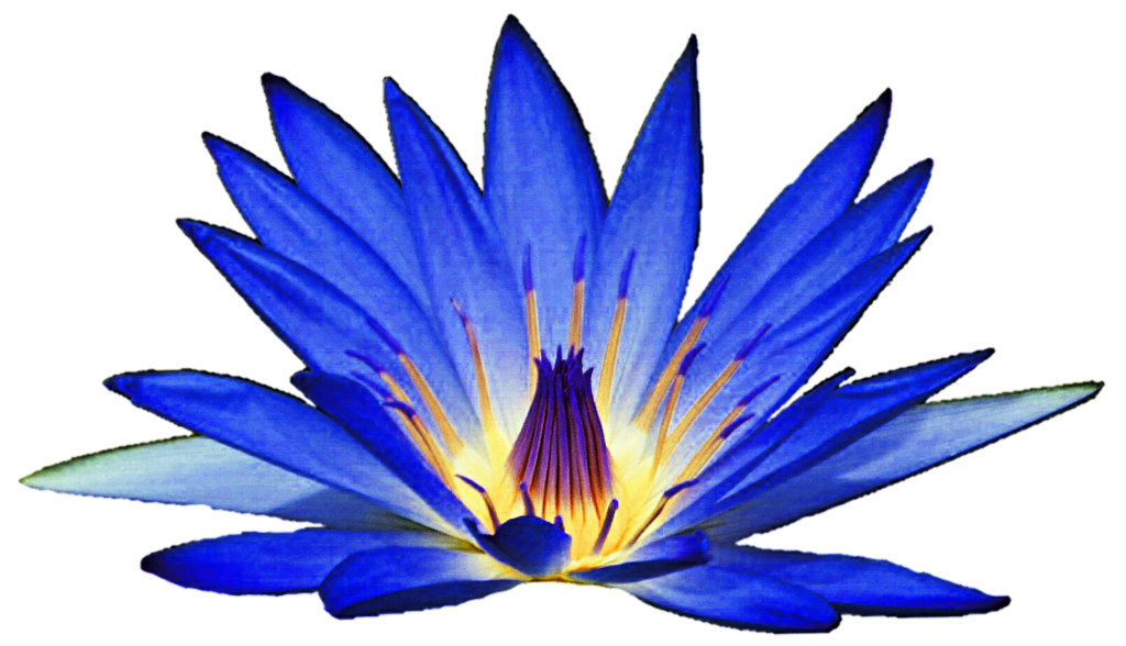 Blue Water Lily Flower Clipart.
