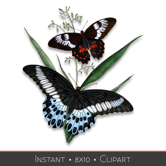 Items similar to Butterfly Download.