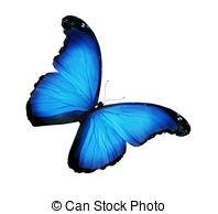 Blue morpho Illustrations and Stock Art. 1,511 Blue morpho.