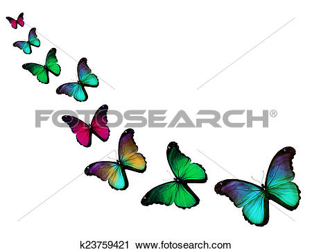 Clipart of Yellow blue morpho butterflies, isolated on white.