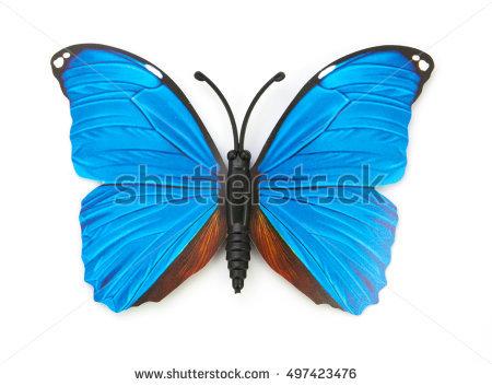Butterfly Clip Art Species Blue Morpho Stock.