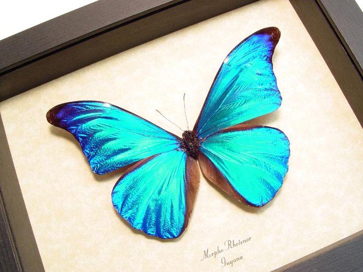 1000+ images about Crafts, Butterflies & Friends on Pinterest.