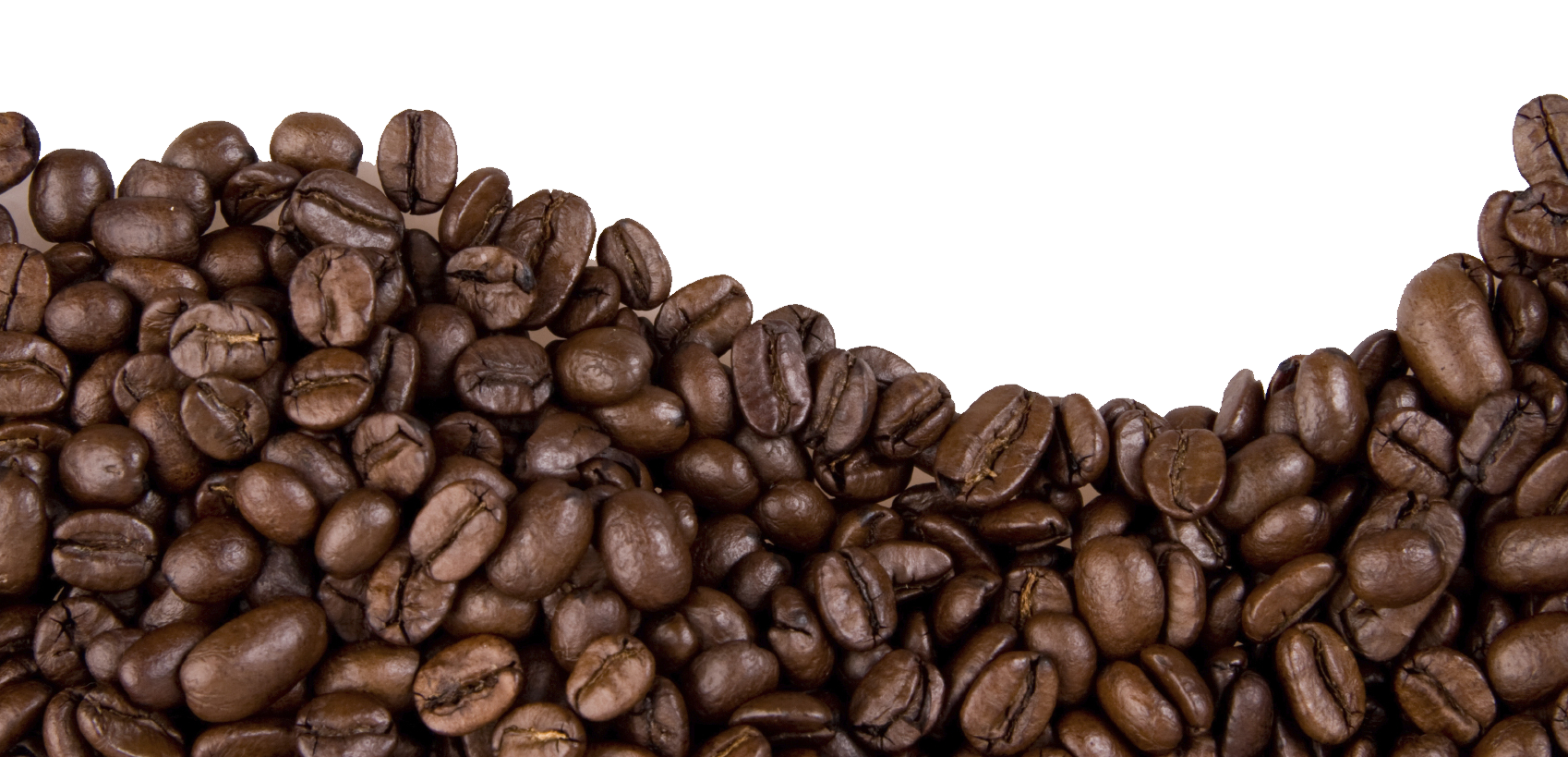 Jamaican Blue Mountain Coffee Cafe Coffee bean.